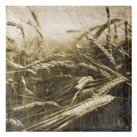 Wheat Fields Framed Print
