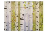 Modern Birch Fine Art Print