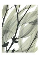 Eucalyptus Safari Fine Art Print