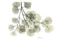 Eucalyptus Fine Art Print