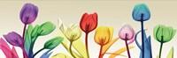 Floral Rainbow Splurge Fine Art Print