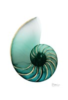 Shimmering Snail 4 Fine Art Print