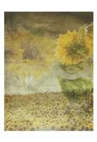 Dear Sunflower Field Fine Art Print