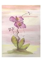 Orchid Trio 1 Fine Art Print