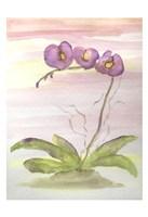 Orchid Trio 2 Fine Art Print