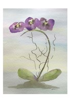 Orchid Duo 2 Fine Art Print