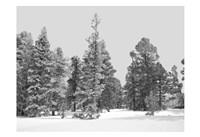Forest Freeze BW Fine Art Print