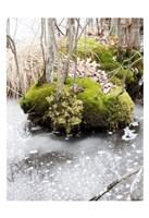 Winter Bog Fine Art Print