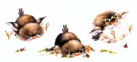 Bird And Ladybug Fine Art Print