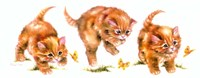 Kitten And Butterfly Fine Art Print