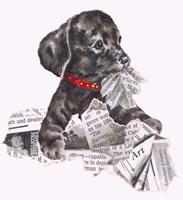 Newspaper Pup - 13A Fine Art Print