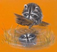 Reflective Racoon - 35A Fine Art Print