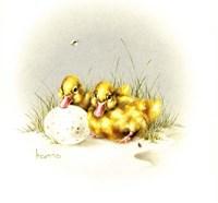 Ducks And Egg Fine Art Print