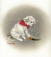 Dalmation 3- Sprinkles Fine Art Print