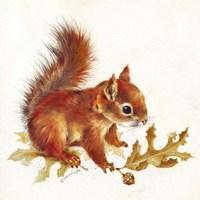 Red Squirrel Fine Art Print