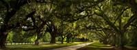 Southern Canopy Fine Art Print