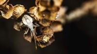 Shield Bug On Brown Leaves Fine Art Print