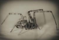 Spider 2 Fine Art Print