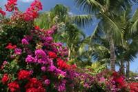 Palm Bougainvillea 9280 Fine Art Print