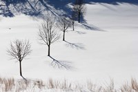 Winter Field Silhouettes Fine Art Print