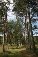 Pine Path Vertical Fine Art Print