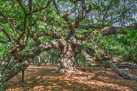 Angel Oak Fine Art Print