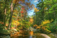 Autumn Brook Fine Art Print