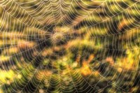 Morning Web Fine Art Print