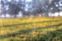 Paddock Web Fine Art Print