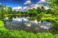Summer Pond Fine Art Print