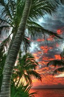 Key West Palm Sunrise Vertical Fine Art Print