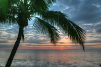 Key West Sunrise One Palm Fine Art Print