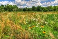 Late Summer Meadow Fine Art Print