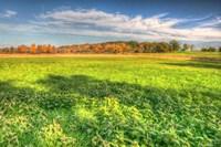 Meadow Early Autumn Fine Art Print