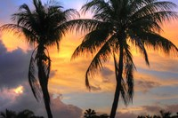 Key West Two Palm Sunrise Fine Art Print