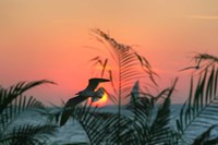 Sunset Gull and Fronds Fine Art Print