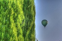 Tuscan Cedar and Balloon Fine Art Print