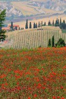 Tuscan Vertical Poppies Fine Art Print