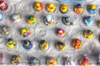 Rubber Duckies from Above Fine Art Print