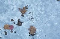 Frozen 1 Fine Art Print