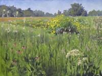 Summer Meadows Fine Art Print