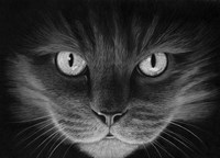 Hypno Cat Fine Art Print