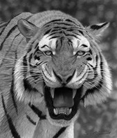 Tiger Growling Fine Art Print