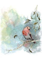 Robin's Winter Fine Art Print