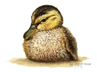 Duckling Fine Art Print