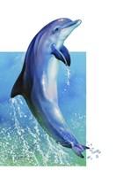 Jump Dolphin Fine Art Print
