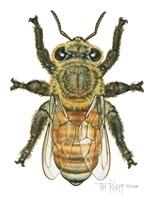 Worker Honey Bee Fine Art Print