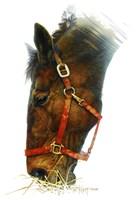 Equestian Fine Art Print