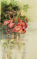 Flamingo Paper Fine Art Print