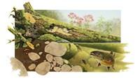 Trout Stream Fine Art Print